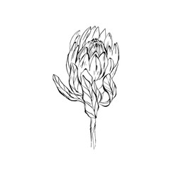 Hand made vector abstract graphic ink peony flower head isolated on white background. Outline design elements for boho wedding, birthday, save the date card