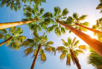 Obraz palm trees - fototapety do salonu