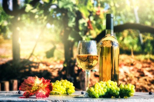 Bottle and full glass of white wine over vineyard background. Wine tasting concept