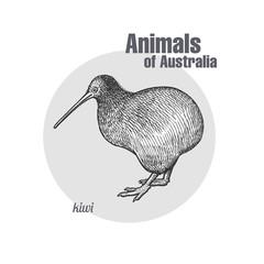 Kiwi bird isolated on white background.