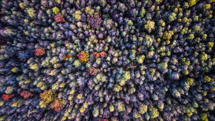 Drone view close-up of a forest with colorful trees