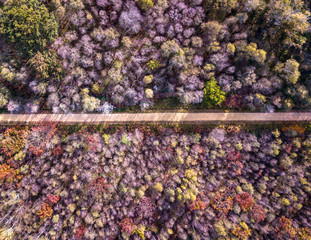Drone view close-up of a forest with colorful trees and wood trail path