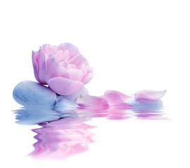 spa de flores aislado