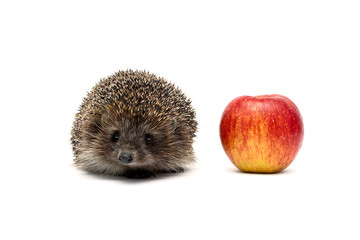 small hedgehog and red apple isolated on white background