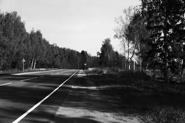black and white photo of the forest road