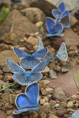 Butterflies in groups