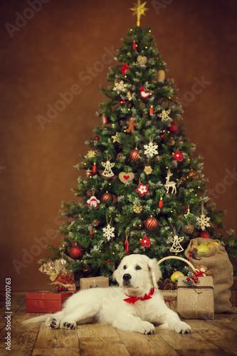 Christmas Dog, White Puppy Retriever Lying Under New Year Tree ...