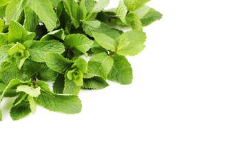 Fresh mint leafs on white background