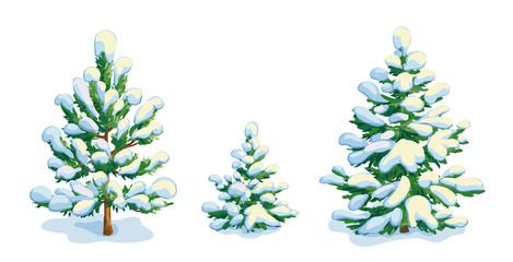 Little snow-covered pine tree and two fir trees. Vector dwawing