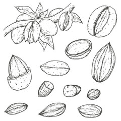 Set of almonds in retro vintage hand drawn, sketches, engraved style. Isolated on white background. Modern vector illustration.