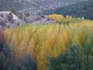 Paisaje de  otoño en Calomarde (Teruel, España)