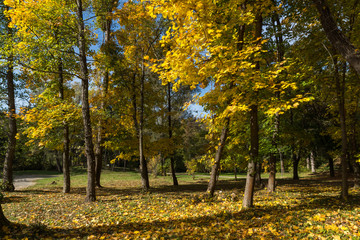 Autumn landscape with Yellow trees in South Park in city of Sofia, Bulgaria