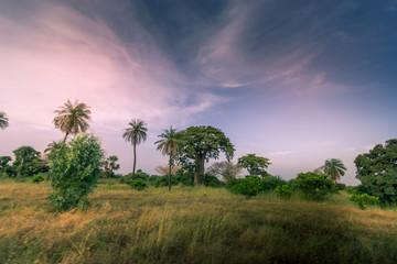 Poster Baobab Baobab du Sénégal