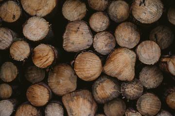Geschnittene Baumstämme