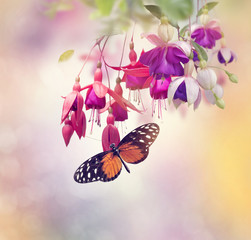 Fuchsia Flowers and butterfly