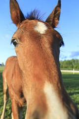 Close up of curious young horse