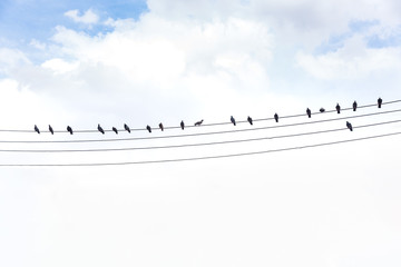 pigeon silhouette, bird on the cable rope, abstract background,