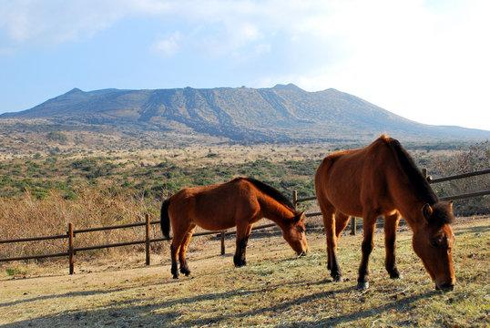 三原山と馬2頭