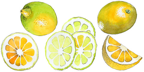 Exotic lemon healthy food in a watercolor style isolated. Full name of the fruit: lemon. Aquarelle wild fruit for background, texture, wrapper pattern or menu.