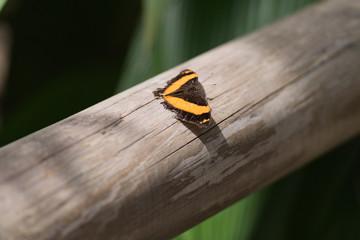 Schmetterling auf Handlauf