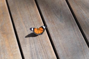 Schmetterling auf Holzpaneele