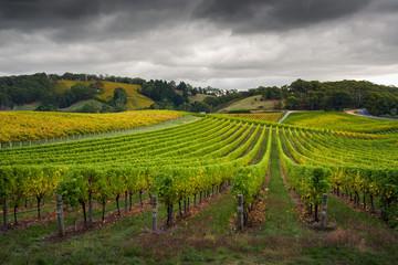Fototapete - Fresh Vines