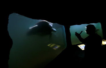 Tourist takes pictures of a Green Turtle at the Zoological Gardens in Colombo