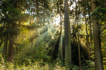 Sonnenstrahlen durch den Wald