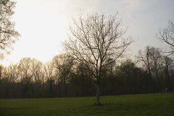 albero parco tramonto
