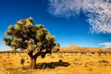 Joshua Tree National Park Kalifornien