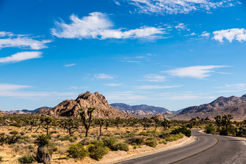 Straße durch den Joshua Tree National Park Kalifornien