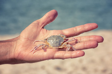 White sand crab in the human hand