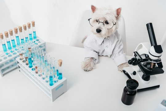 dog in chemical laboratory