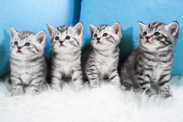 Cute kittens. Striped kittens sit and look aside