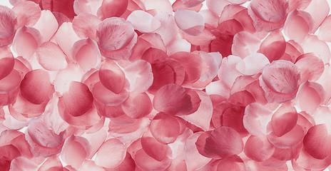 fondo de pétalos de rosas