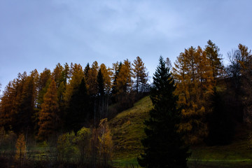autumn trees in the alps