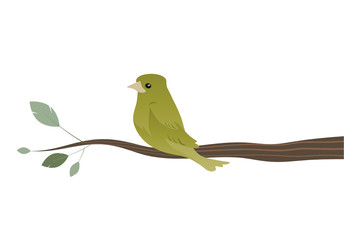 Cute sparrow on a branch isolated on white background. Vector Illustration