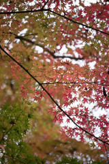under the led autumn leaves