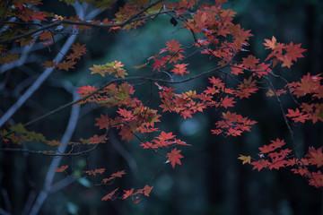 Autumn leaves in the dark sky