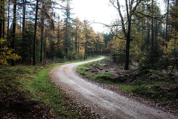 Forest in autumn, Utrechtse heuvelrug