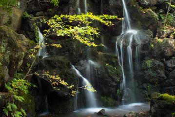 Waterfall in a Japanese garden