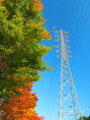欅の黄葉と鉄塔