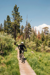 Man cycling on path through forest, Mammoth Lakes, California, USA, North America