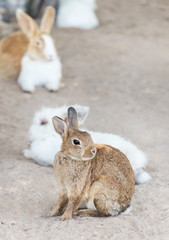 Close up brown little rabbit sitting in outdoor nature habitat Easter day idea concept.