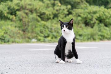 黒と白の猫のポートレート