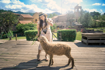 Asian woman is feeding to sheep at farm with village background