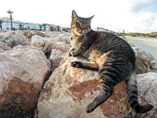 Freie Katze in Lagos
