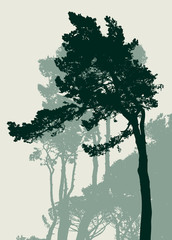 silhouettes of the italian pines