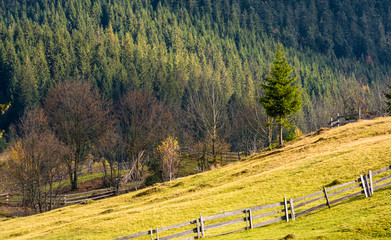 lovely rural scenery with fence on grassy hillside. beautiful countryside background