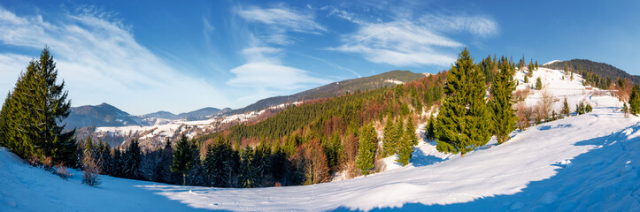 gorgeous panorama of winter countryside. beautiful scenery with spruce trees on snowy hillside. village in a distance at the foot of mighty Carpathian mountain ridge